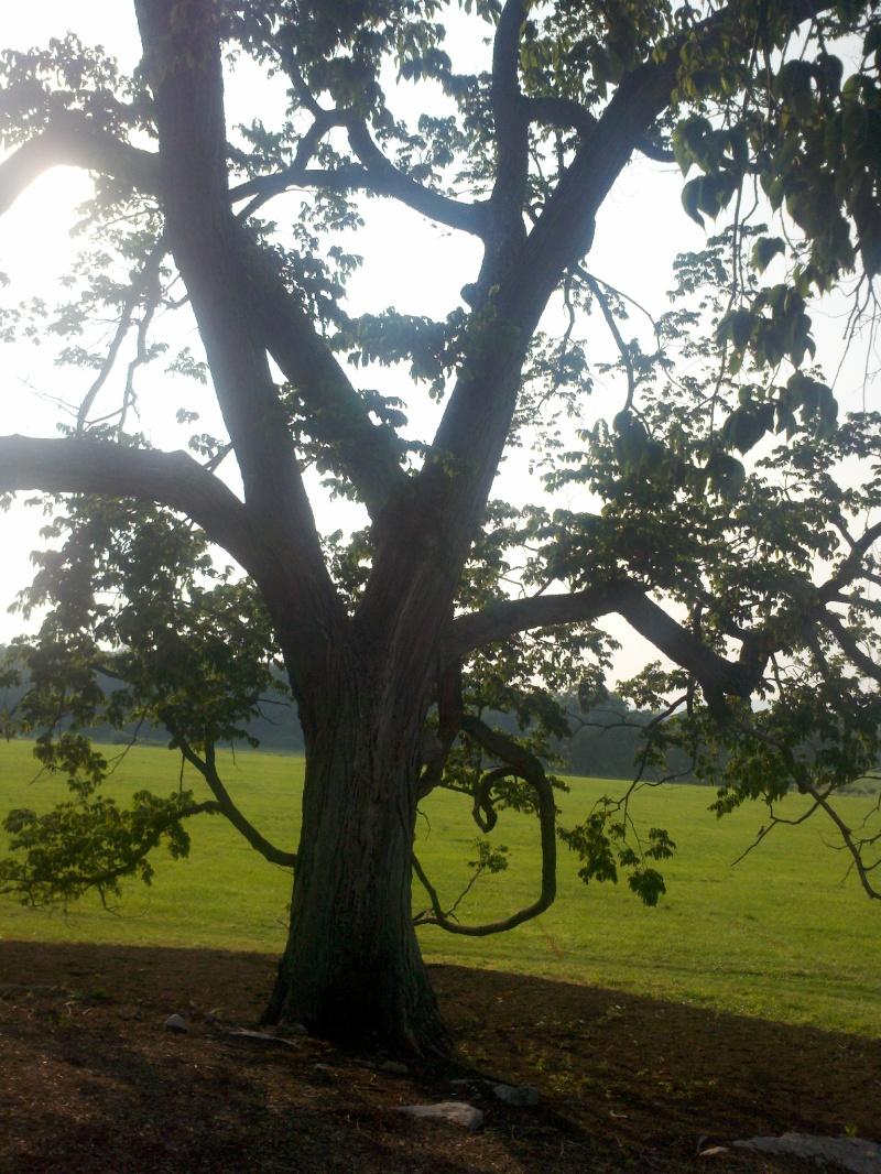 treePSU